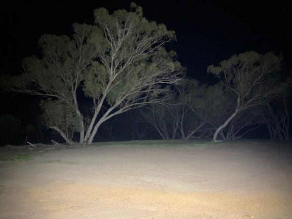 80 Watt LED Flood Light, night time shot, closest trees at 24 metres